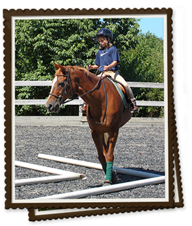 Whimsy Brook Farm | Horse Wellness Services in Redding, CT | Horse